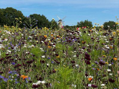 Blühwiese beim Landschaftsmuseum Unewatt